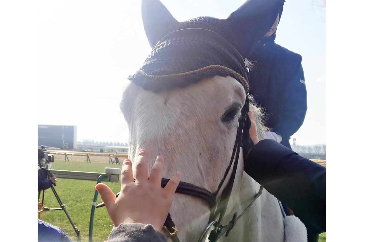 東京競馬場の誘導馬