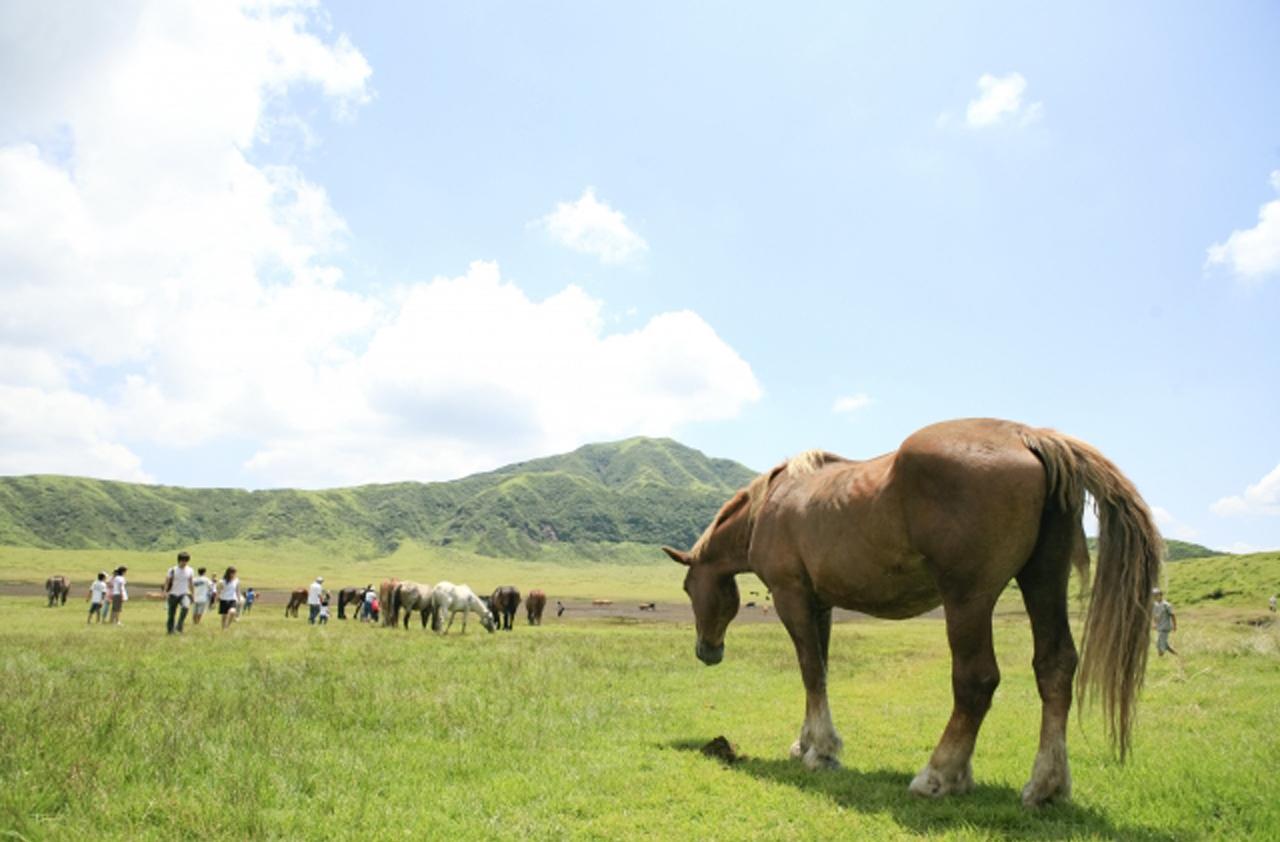 草原と馬の画像