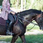 乗馬する人と馬の画像